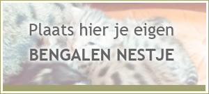banner-kittens