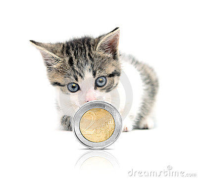kat-en-geld-thumb19330886
